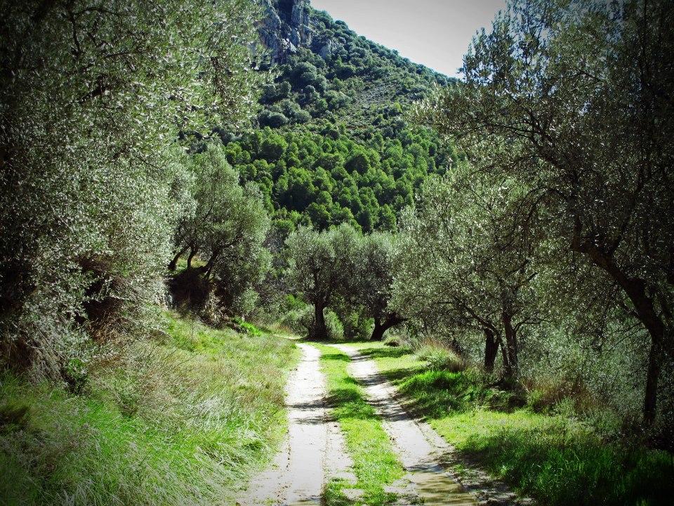 olive track